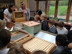 Bees observation