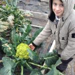 Children back on the school farm: who is the more photogenic, JS in Y5 or the Romanescu cauliflower?